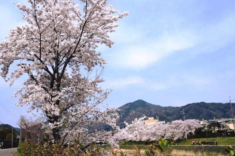 Rikyu-ki Message from Oiemoto Zabosai